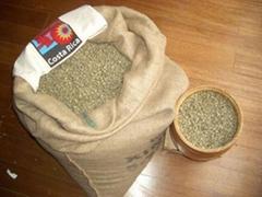 哥斯达黎加咖啡生豆