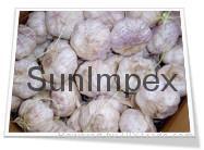 Fresh White Garlic,Fresh Normal Garlic