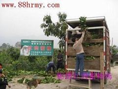 海南农科院引种红肉蜜柚