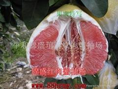 供應有機紅肉蜜柚