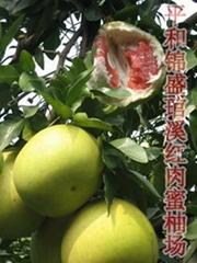 柑桔类新品种-----红肉蜜柚