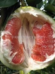 供高端水果---紅肉蜜柚