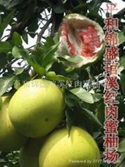 供應高端水果--紅肉蜜柚