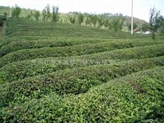 贵州红星发展都匀绿友有限责任公司