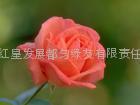 供應玫瑰精油