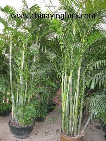Image Result For Very Low Light Indoor Trees