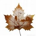 leaf carving 03