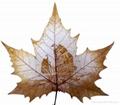 leaf carving 04