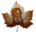 leaf carving 018