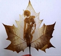 leaf carving 0117