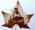 leaf carving 016