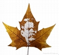 leaf carving 020