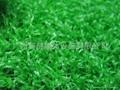 供应人造草、AJ-CP001-