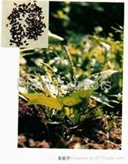 Radix Puerariae,Shitake Mushroom PE,Wumei(Frunus mume) Ext.Pwd