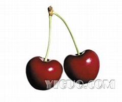 Fresh Superior Fruits