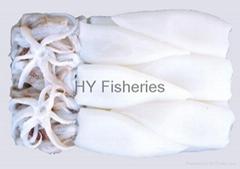 Squid /Sleeve-fish T+T