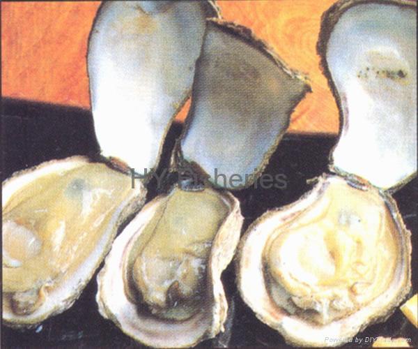 shellfish-oyster