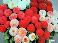 花卉种子价格