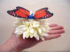 Plam Butterfly