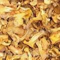chanterelle (fungus)