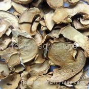 dried mushroom slice