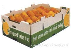 packed tangerine, mandarin orange 1