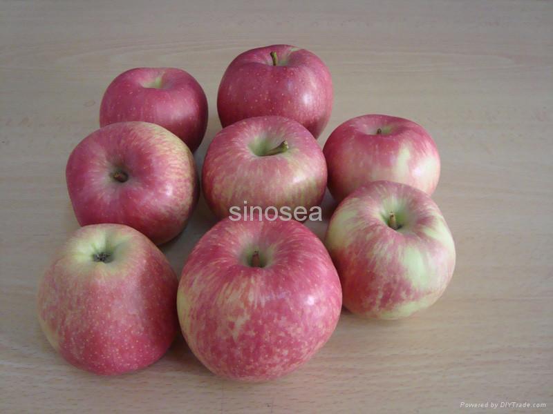 fresh red star apple 1