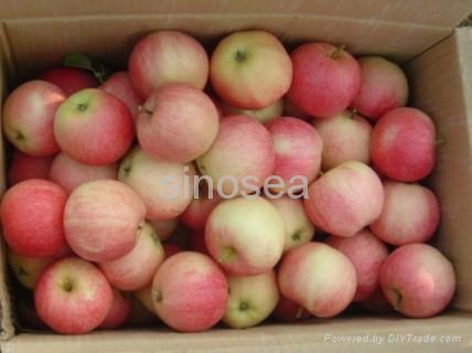 fresh gala apple 1