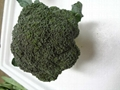 fresh broccoli 2