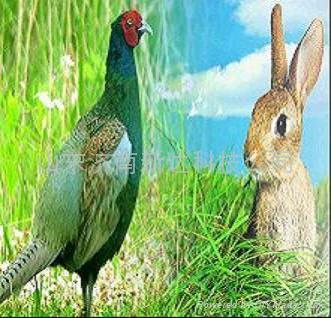 活捕野鸭野兔新产品
