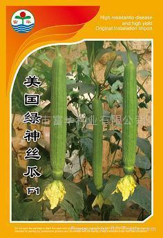 丝瓜种子美国绿神 1