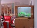 家居免换水生态水族箱 5