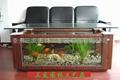 生态壁画鱼缸 4