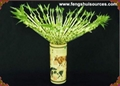 Wholesale Lucky Bamboo from China directly. 4