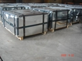 electrolytic tinplate coils 5