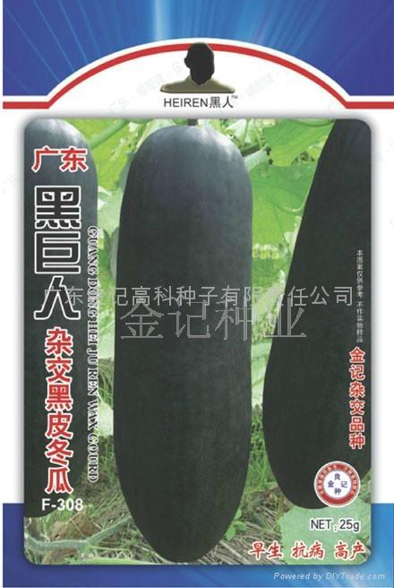 黑巨人杂交黑皮冬瓜种子F-308 1
