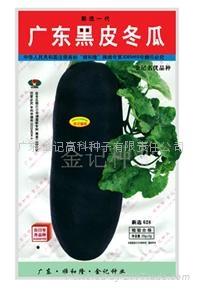 广东黑皮冬瓜种子628 1