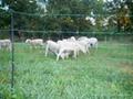 Grassland fence 3