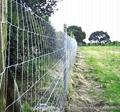Grassland fence 5