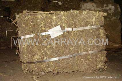 Licorice Roots 1