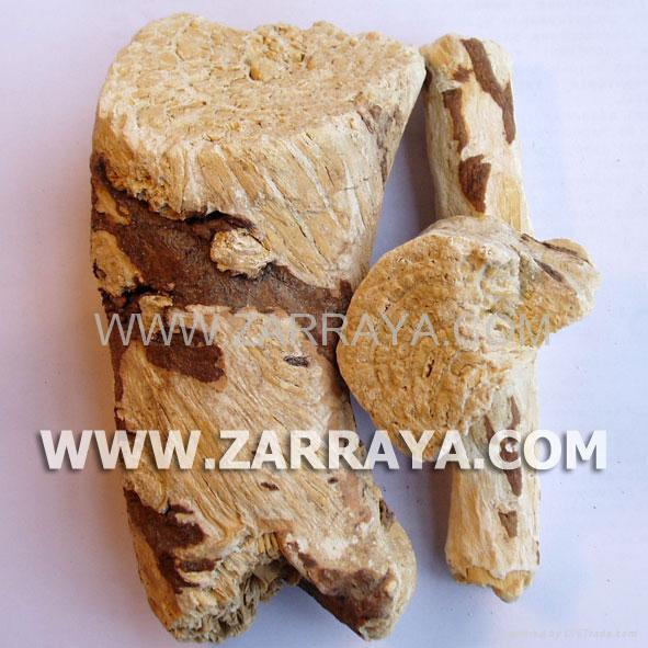 Soap Root 1