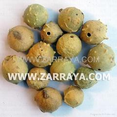 Gall Nut