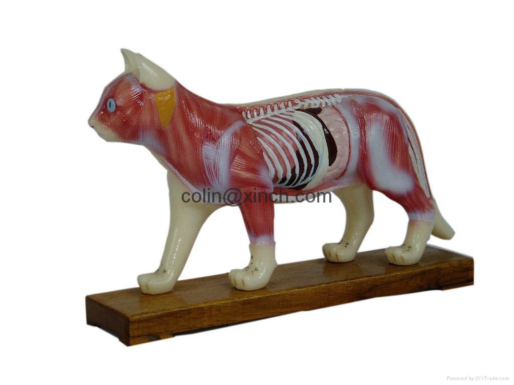 Animal Model Dig Model Pig Model Cat Model Horse Model