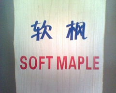 美国硬枫木软枫木太平洋枫木