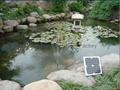 solar pond fountain 3