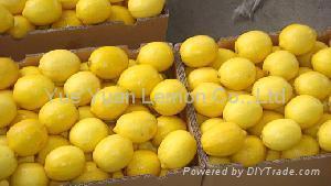 Yellow Lemon,lemon In China 1