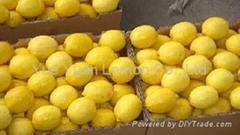 Yellow Lemon,lemon In China