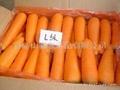 供胡萝卜   2