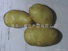 for potatoes   for Potato