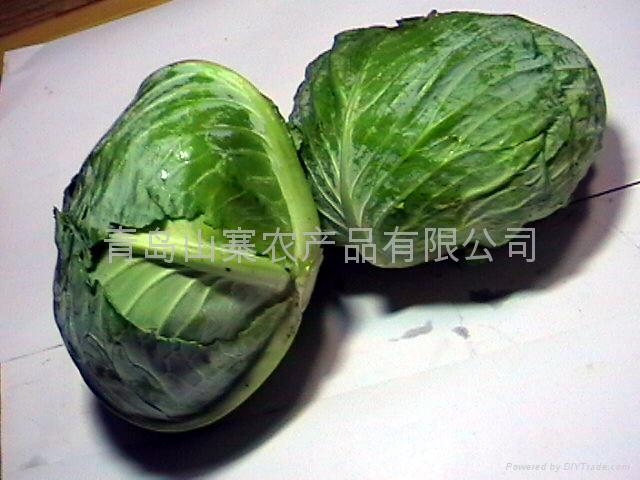 for cabbage 3